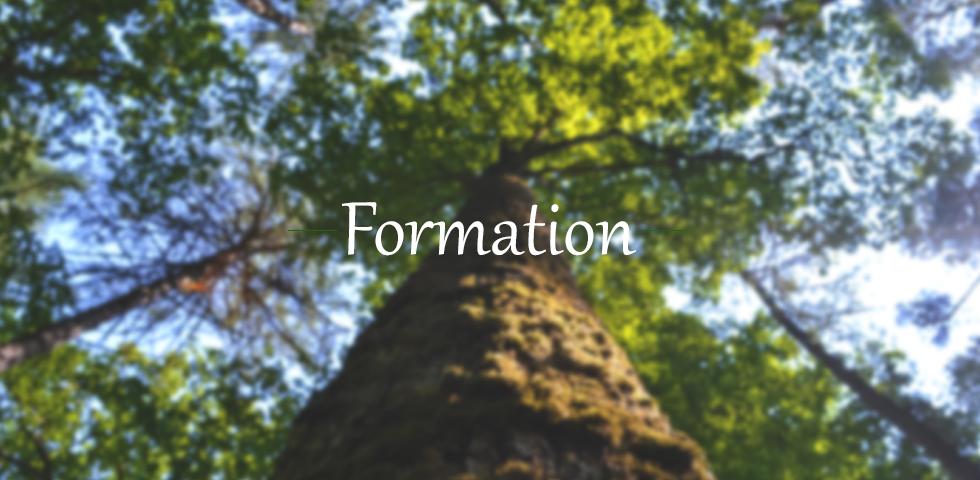 marine blog, green marine naturo, green marine formation arbre infographie