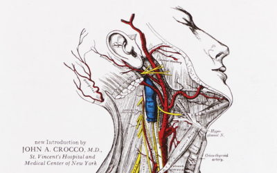 En(quête) de périnée – 2. Anatomie/Physiologie