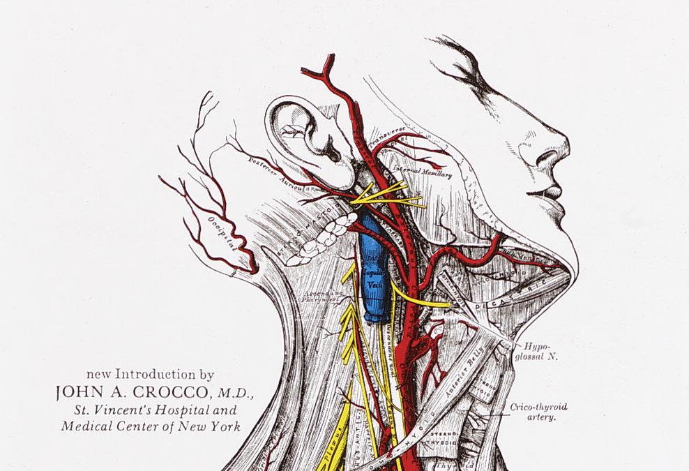 Fein Anatomie Und Psysiology Fotos - Anatomie Ideen - finotti.info
